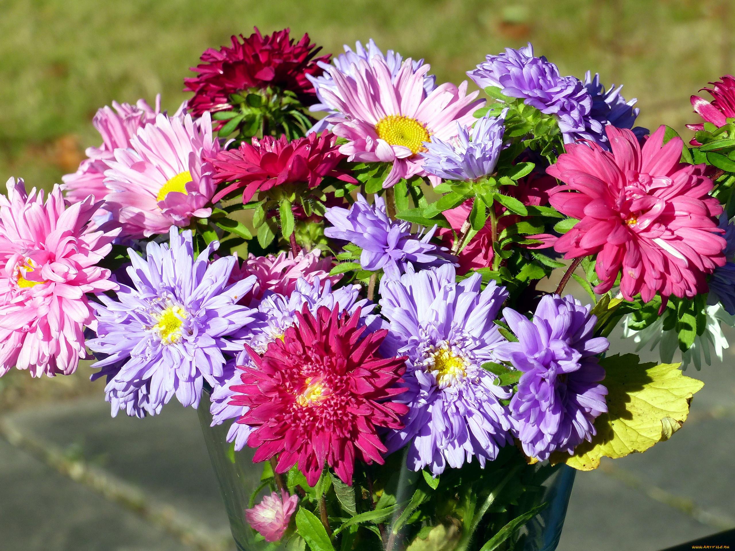картинки букет астр цветы первое